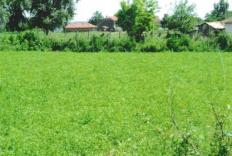 Large green plot few kilometers from a dam lake!
