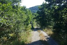 Mature woodland for sale in Bulgaria in prime forest region